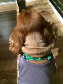 もしものために、愛犬のために、ペット保険に入っていますか?