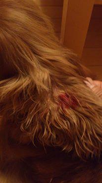 犬のアレルギー性皮膚炎に悩む人へ