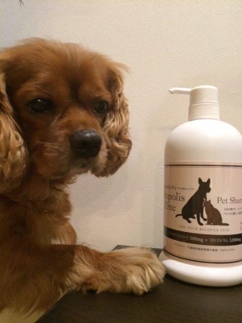 犬のアレルギー性皮膚炎に効果のあるシャンプー、それは・・・『プロポリス・ワン』です