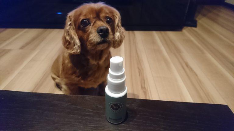 『アヴァンス(AVANCE)』という乾燥肌、アレルギー性皮膚炎に効果のある犬用化粧水を購入しました