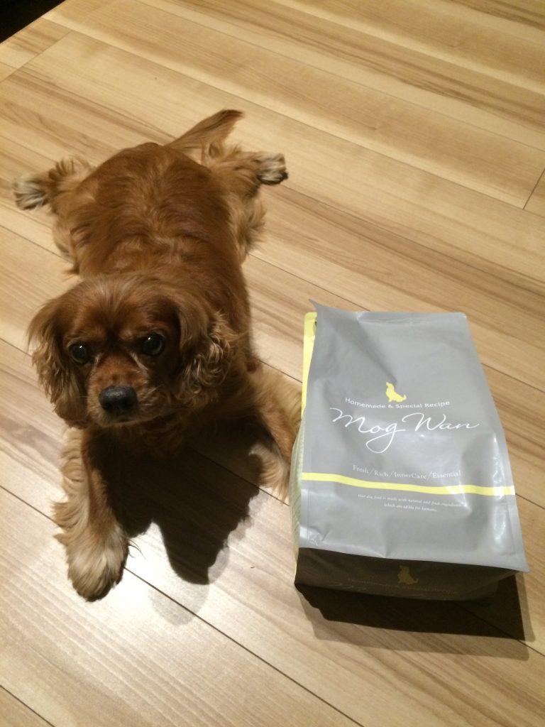 シニア犬にやさしい「手作り」をコンセプトにした『モグワンドッグフード』を実際に検証しました