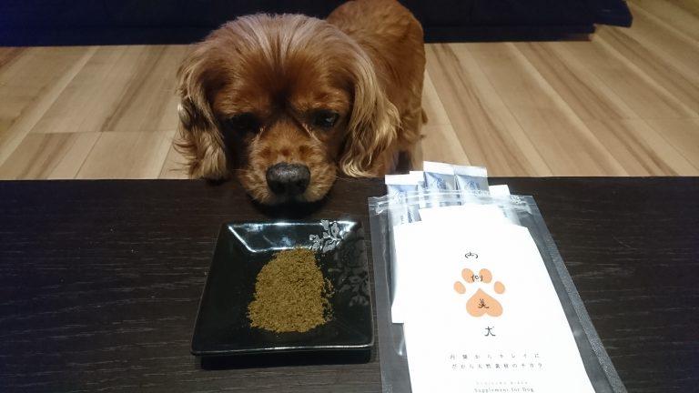 『内側美犬』とは・・・?!アレルギー犬用サプリを購入しました