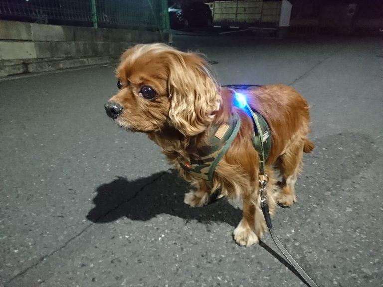 『毎日散歩』サプリで犬の健康な関節、肥満防止をサポートする。