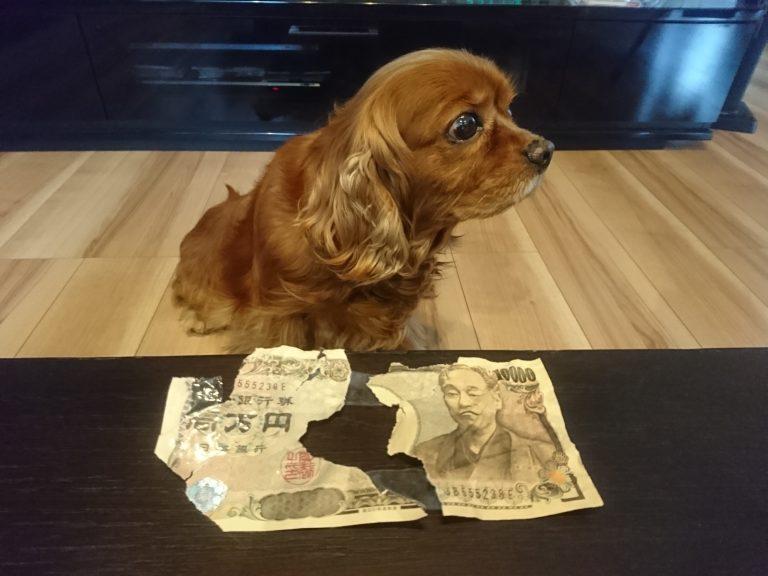 金食い虫ならぬ「金食い犬」コジロウ参上!!