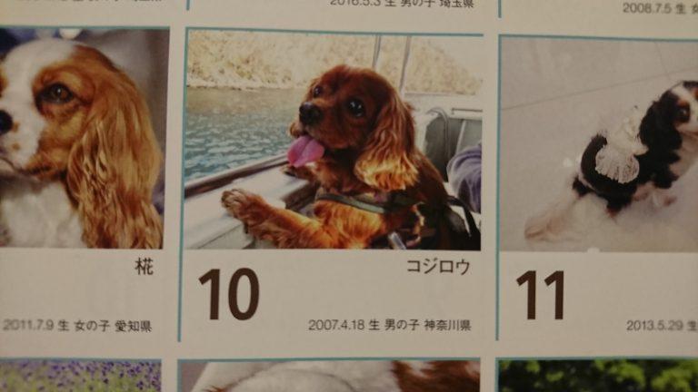 2018犬カレンダー作りました