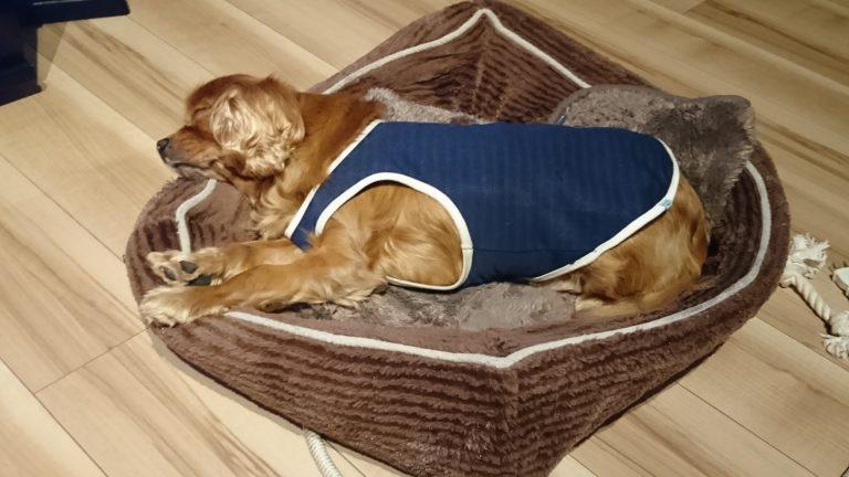 犬は飛行機の気圧の変化に耐えられるのか?てんかん?耳、心臓大丈夫?