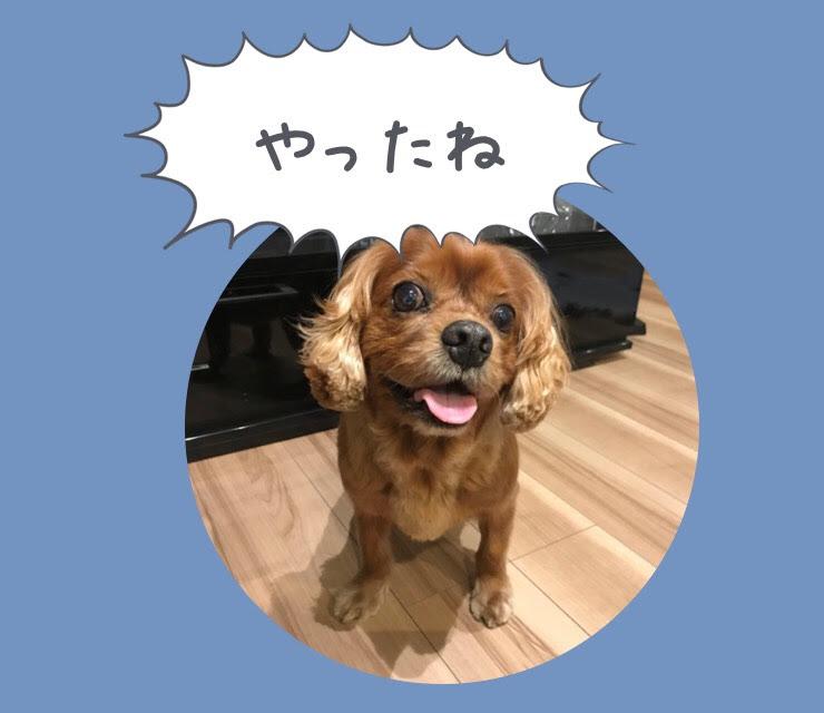 愛犬と泊まるリゾートホテル『&WAN(アンドワン)九十九里』に宿泊しました!!【千葉県山武市】
