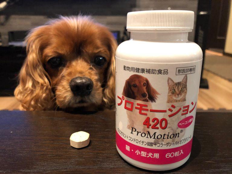 『プロモーション420』とは?!獣医おすすめ、犬の関節用サプリメントの効果と口コミは?!