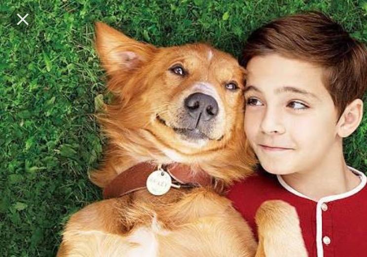 犬好き必見の号泣映画『僕のワンダフル・ライフ』がおすすめ