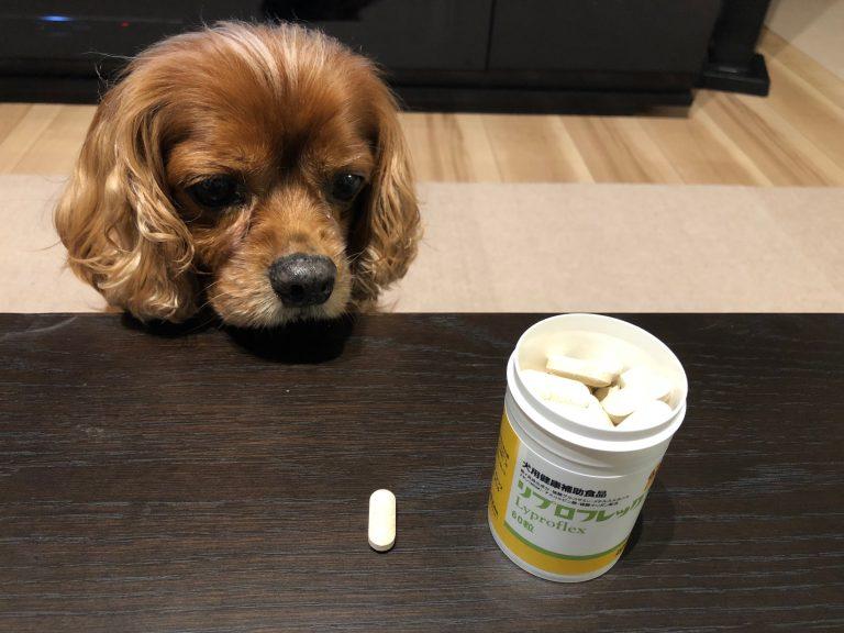 犬用関節サプリを食べない・・・人間用なら食べた?このサプリの効果は?!