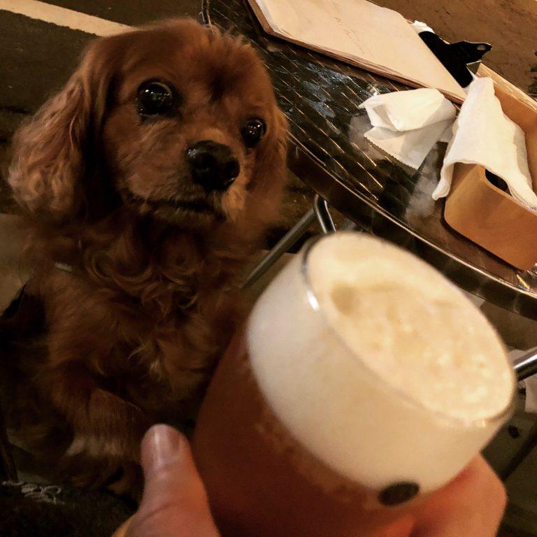 11歳の誕生祭、シニア犬コジロウとカフェに行く。