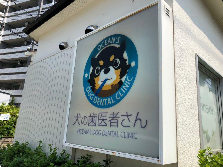 犬専用の歯医者さん。コジロウ歯周病チェックして治す!!【画像あり】