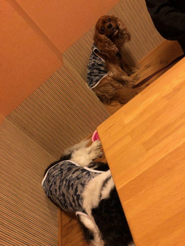 犬OKのお寿司屋さん『町の』北海道小樽市2