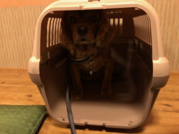 犬OKのお寿司屋さん『町の』北海道小樽市3