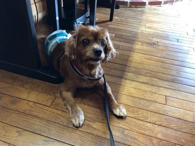 コジロウと泊まった犬同伴OKの宿『パインハウス』北海道小樽