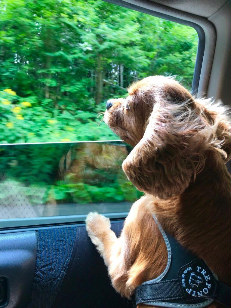 犬同伴OKの宿『ペンション ブルック』に泊まる!北海道旅行【ニセコ編】