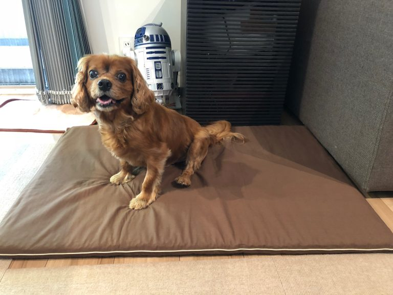 シニア犬コジロウに床ずれ防止「介護用マット」を買いました。