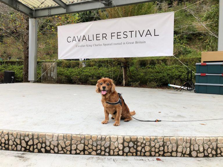 キャバリアフェス2018:イベント雨天中止について考える