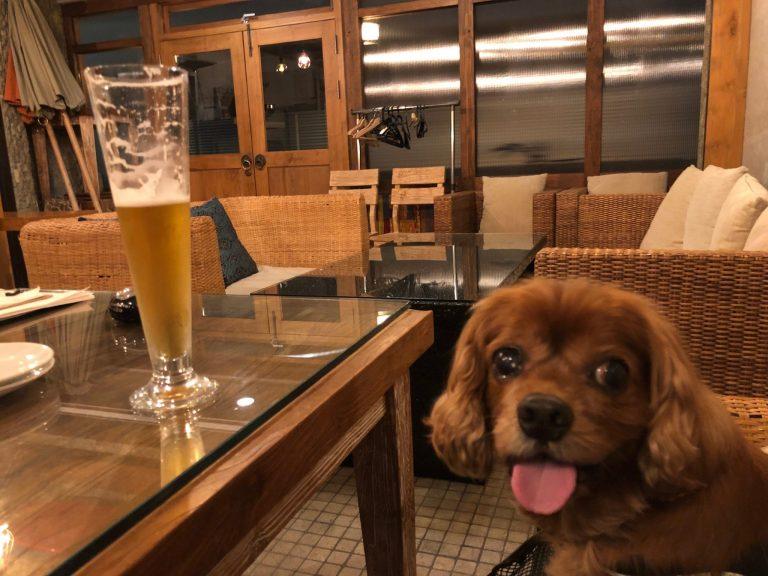 コジロウ12歳。犬OKのイタリアン『Asian Cafe Hiroz』で祝う!!