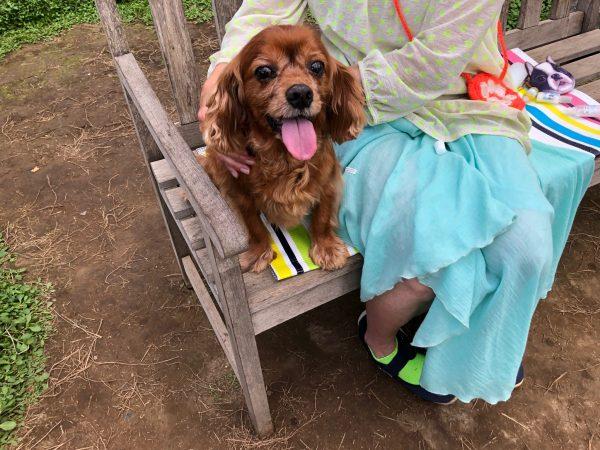 犬,アロママッサージ