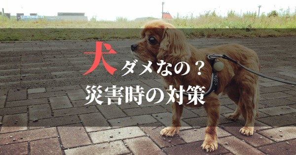 ペット同伴拒否?避難所に犬を連れていけない場合の対策