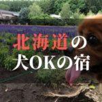 北海道のおすすめ犬と泊まれる宿