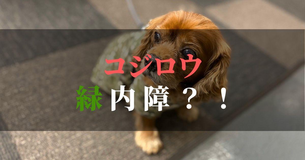 犬,緑内障