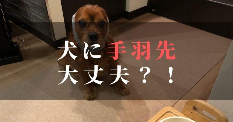 11歳シニア犬コジロウが元気に生きるために。手羽先の先が良い?!