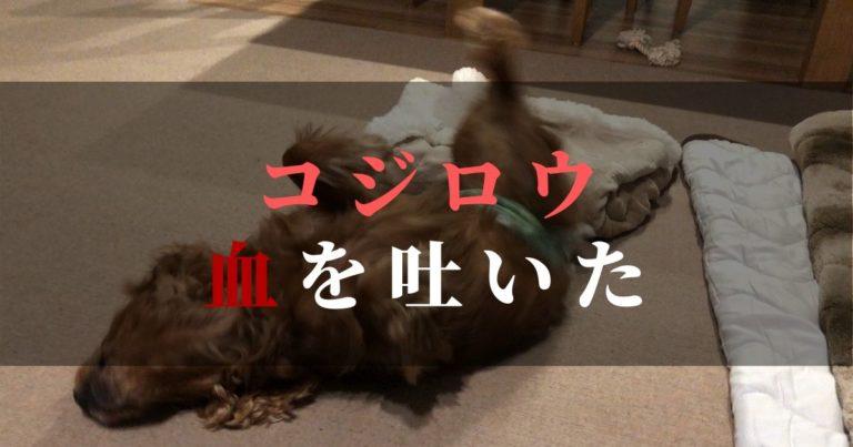 愛犬コジロウ嘔吐・・・しかもピンク色の血が混じる【注:画像あり】