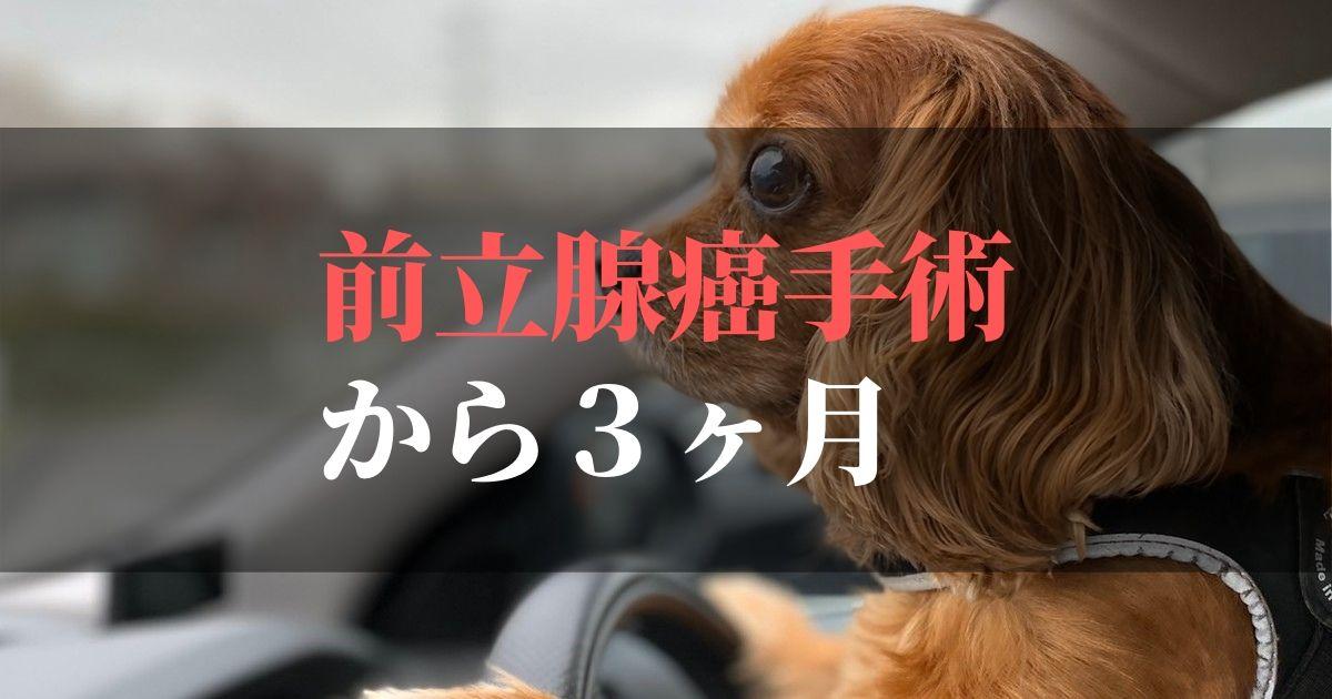 愛犬コジロウ前立腺癌から3ヶ月