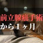 愛犬コジロウ前立腺癌から1ヶ月