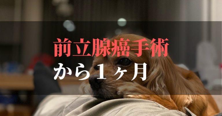 愛犬コジロウ | 前立腺癌摘出手術から1ヶ月:日々更新しています【克服の章】