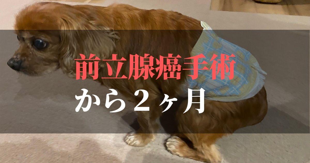 愛犬コジロウ前立腺癌から2ヶ月