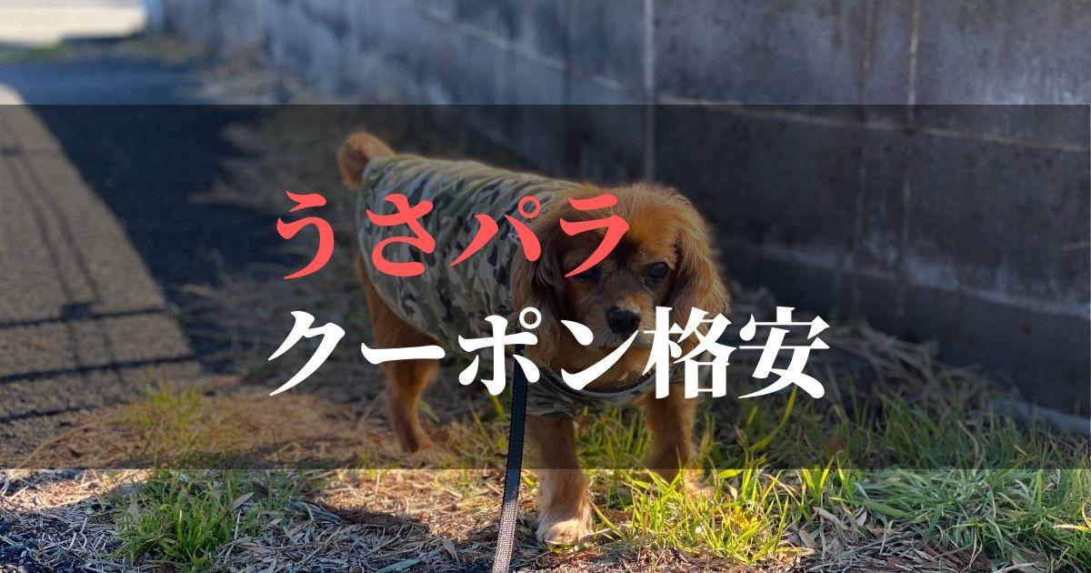 クーポンを使って愛犬のサプリを格安で注文しよう!!【最新版】
