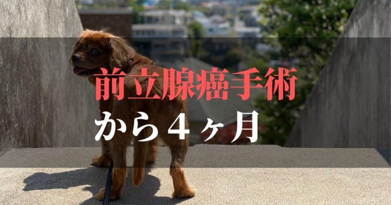 愛犬コジロウ | 前立腺癌摘出手術から4ヶ月:日々ブログ更新中【腫瘍撃退】