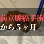 愛犬コジロウ | 前立腺癌摘出手術から5ヶ月:日々ブログ更新中【腫瘍撃退】