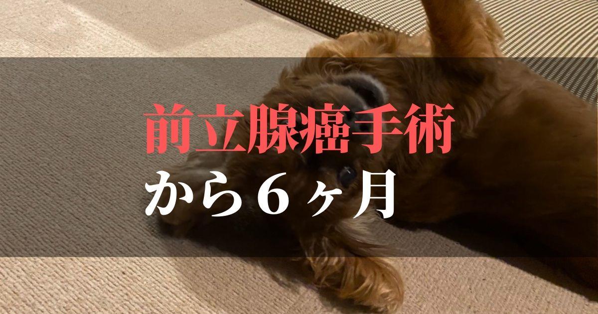 愛犬コジロウ | 前立腺癌摘出手術から6か月:日々ブログ更新中【腫瘍撃退】
