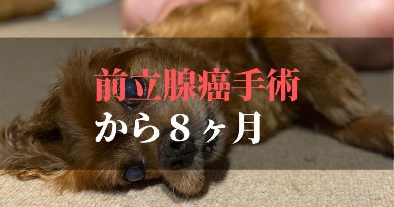 愛犬コジロウ | 前立腺癌摘出手術から8ヶ月:日々ブログ更新中【腫瘍撃退】
