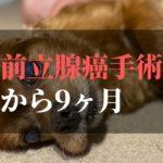犬の前立腺癌ブログ