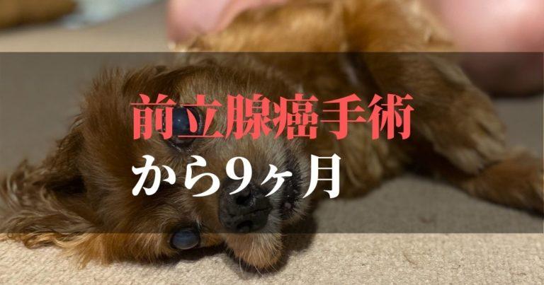 愛犬コジロウ | 前立腺癌摘出手術から9ヶ月:完治に向けてブログ発信中