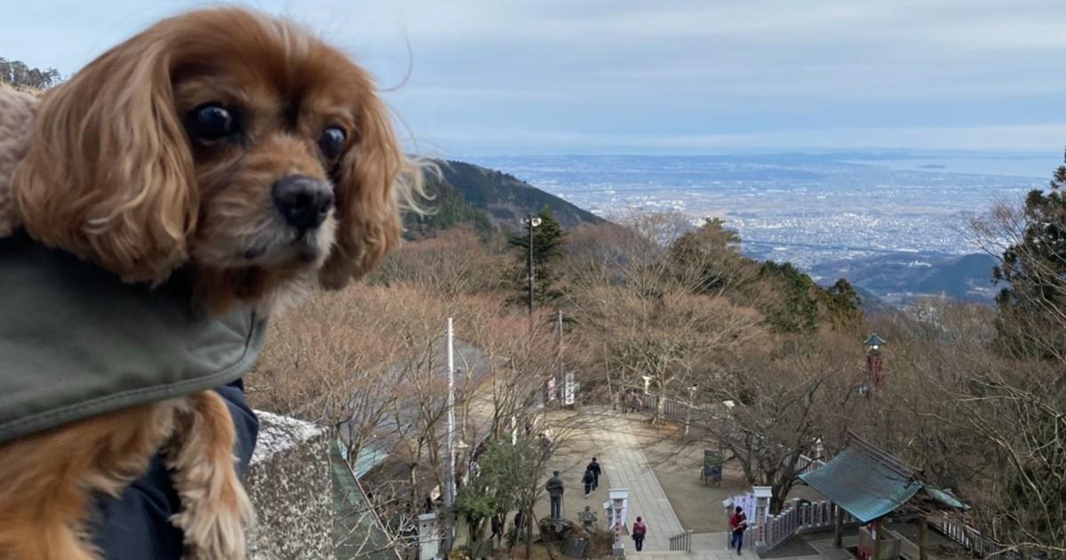愛犬コジロウ、前立腺癌ととことん戦います!!