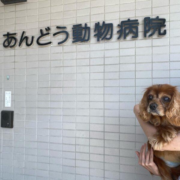 あんどう動物病院へ挨拶に行ってきました【熱中症から救ってくれた恩人です】